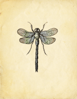 Dragonfly_background