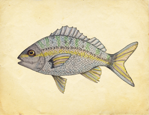 Fisk_3_yellow