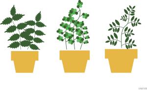 plants_2
